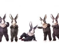 Collage of funny grey rabbits isolated on white background